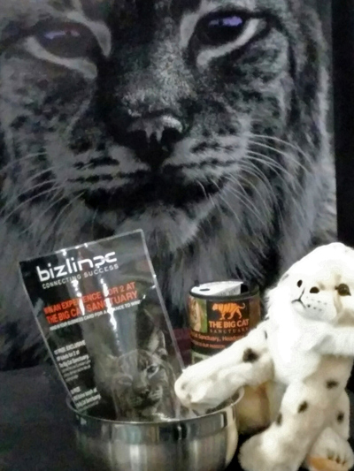 Bizlinx charity member the Big Cat Sanctuary. Petra the European Lynx competition poster and cuddly toy lynx
